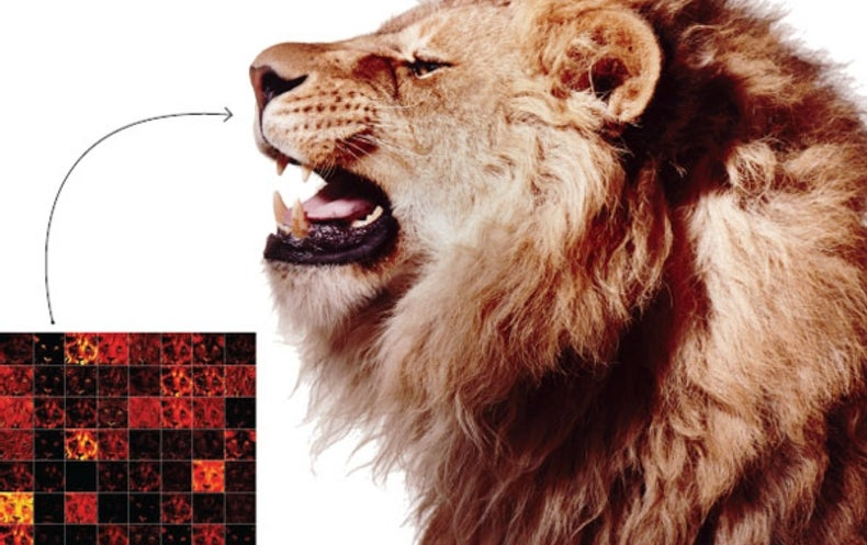 Lion Facial Recognition Debuts in Africa