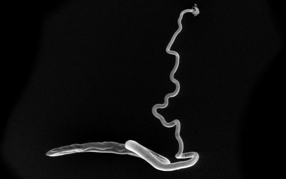 Gut Parasites Have Their Own Gut Microbiomes