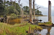 'Tree Farts' Increase Carbon Emissions in Ghost Forests