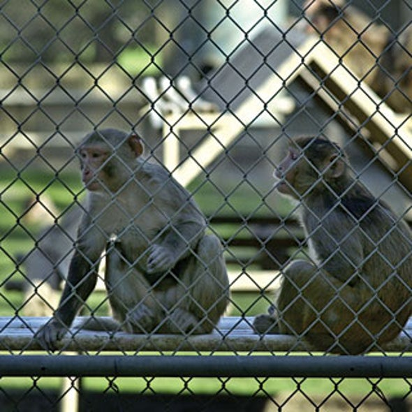 Swiss Primate Legislation Could End Some Brain Research