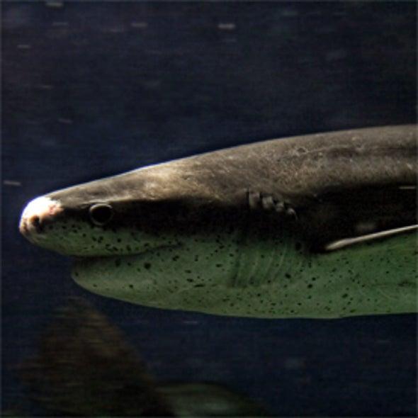 Shark Observation Network