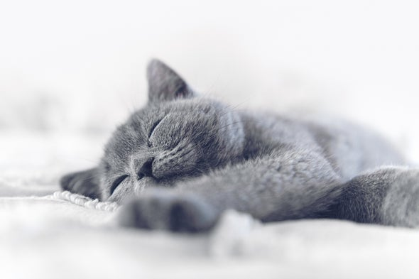 Reimagining of Schrödinger's Cat Breaks Quantum Mechanics—and Stumps Physicists