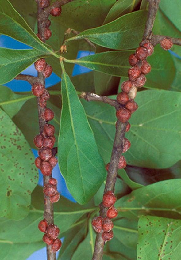 Pests Flourish in Warmer World, Heat Cities Further