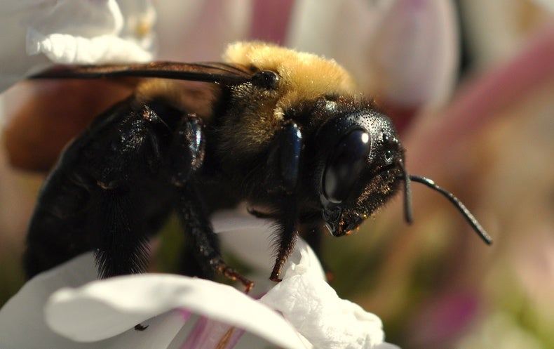 Longer Springs Might Hurt Bees, Not Help Them