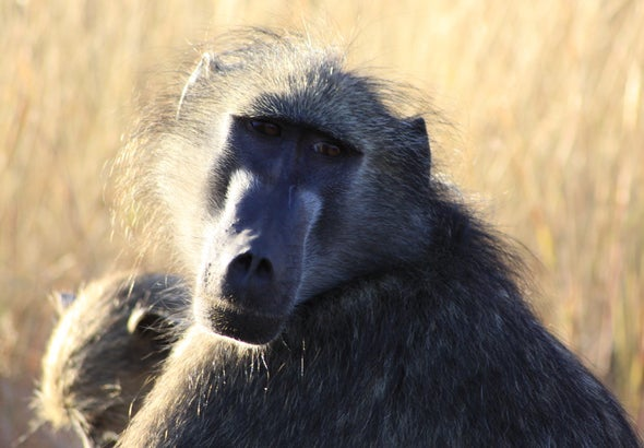 Monkey Say, Monkey Do: Baboons Can Make Humanlike Speech Sounds