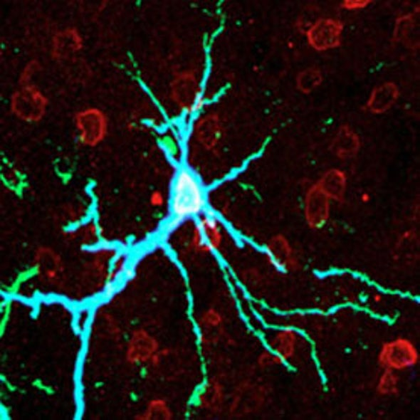 Memory Molecule Dethroned