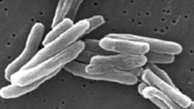 "Fear-Resistance: How Worried Should We Be about ""Totally Drug-Resistant"" Tuberculosis?"