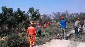 Chain Saw Massacre Escalates Fight between Olive Farmers and Government [Video]