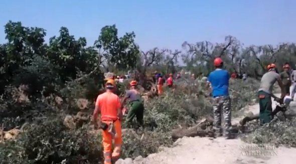 Chain Saw Massacre Escalates Fight between Olive Farmers and Government