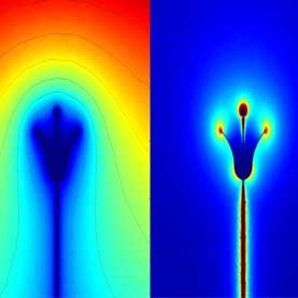 Bumblebees Sense Electric Fields in Flowers