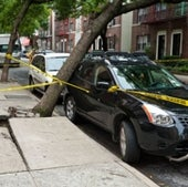 UPROOTED TREE: