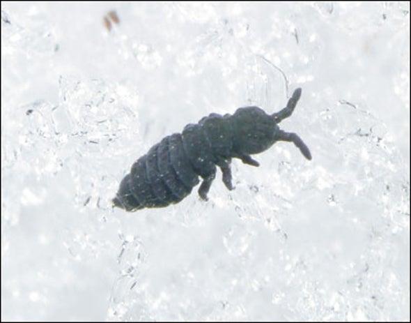 Flea Anti-Freeze