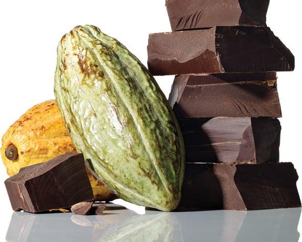 The Race to Save Chocolate