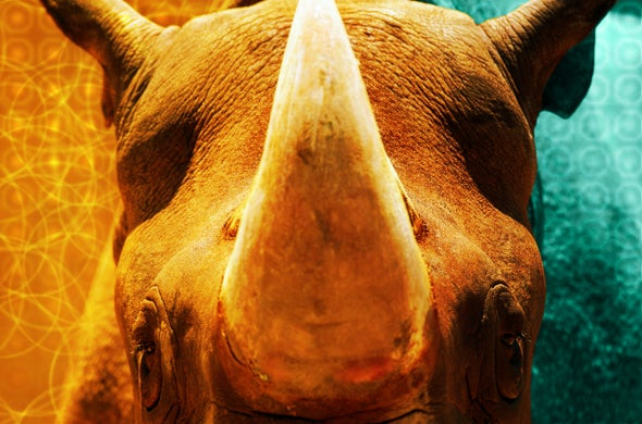Rhinos and Their Gamekeepers Benefit From A.I.