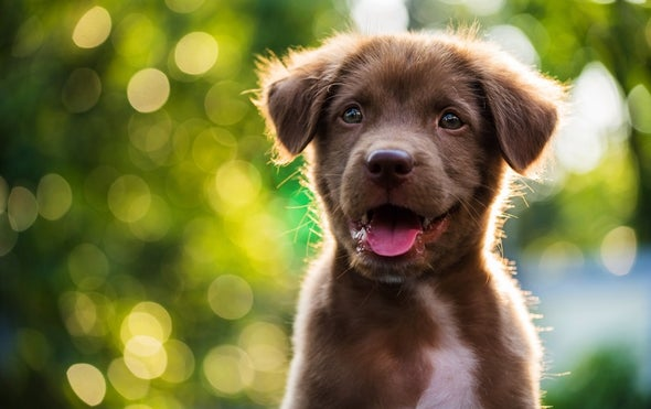 """When Do Puppies Hit """"Peak Cuteness"""" to Humans?"""