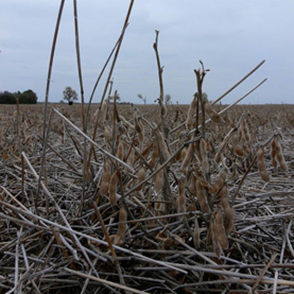 Dry Weather Worries Farmers from Iowa to Pennsylvania
