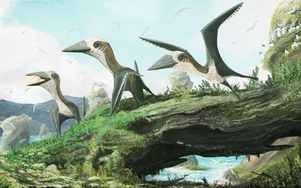 Tiny Pterosaur Claims New Perch on Reptile Family Tree