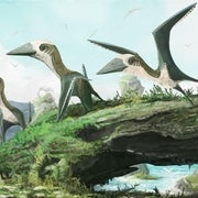 Tiny Pterosaur Claims New Perch on Reptile Family Tree