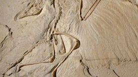 Science and <i>Archaeopteryx</i> Overcome Creationism in South Korea