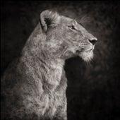 PORTRAIT OF LIONESS AGAINST ROCK