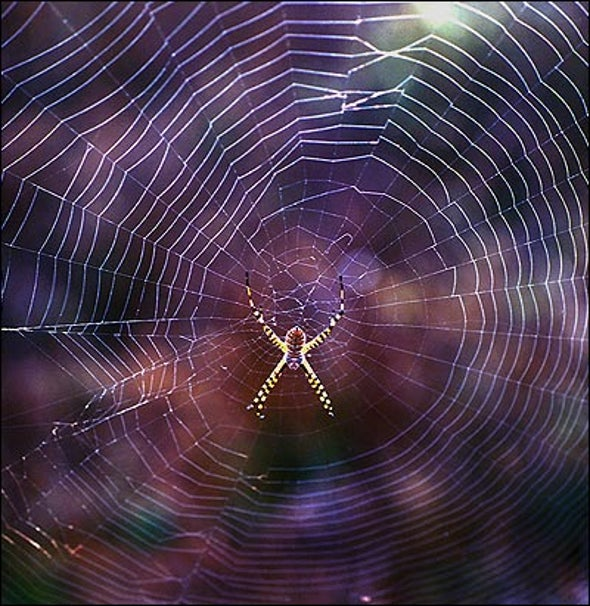 Ancient Orb Weavers