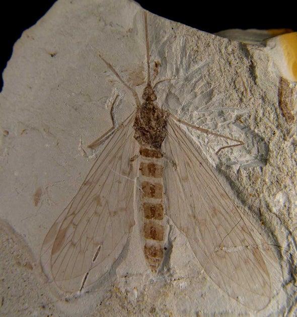Earliest Pollinator?