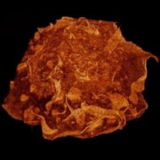 No-Kill, High-Resolution 3-D Movies of Cells Now Possible [Video & Infographic]