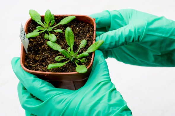 Plants Have Hormones, Too, and Tweaking Them Could Improve Food Supply