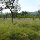 This savanna, in South Africa's Kruger National Park, is part of a long-term experiment in the effects of burning.