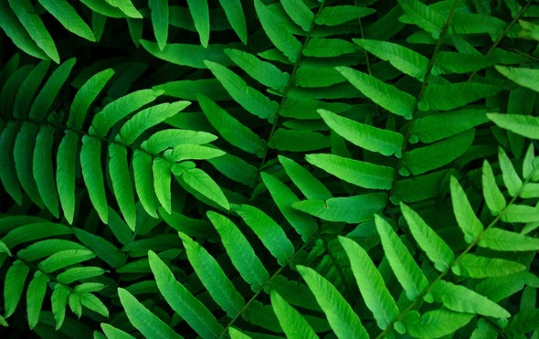 Plants Are the World's Dominant Life-Form
