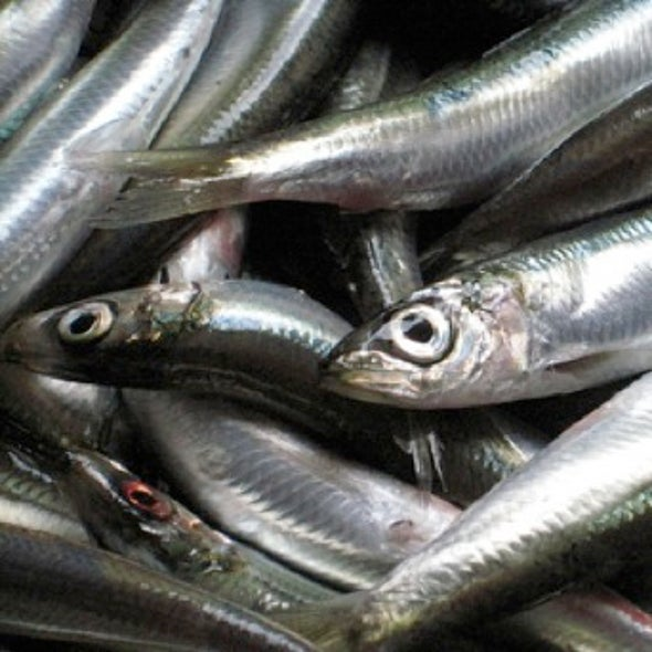 What's the Catch? Researchers Wrangle Over How to Measure Commercial Fishing's Impact on Ocean Biodiversity
