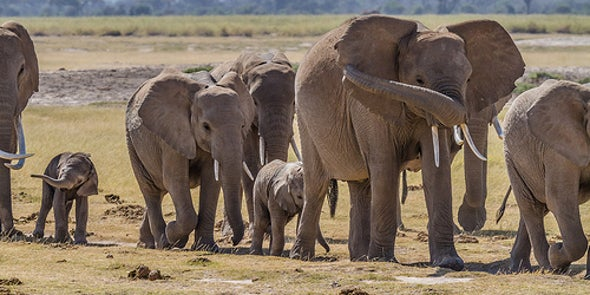 The Science Is In: Elephants Are Even Smarter Than We Realized [Video]
