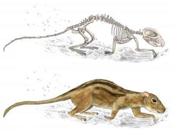 Early Mammals Had Social Lives, Too