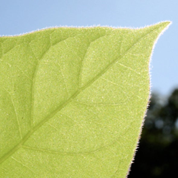 Power Plants: Engineers Mimic Photosynthesis to Harvest Light Energy