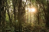 Sacred Groves: An Ancient Tradition of Nature Conservation