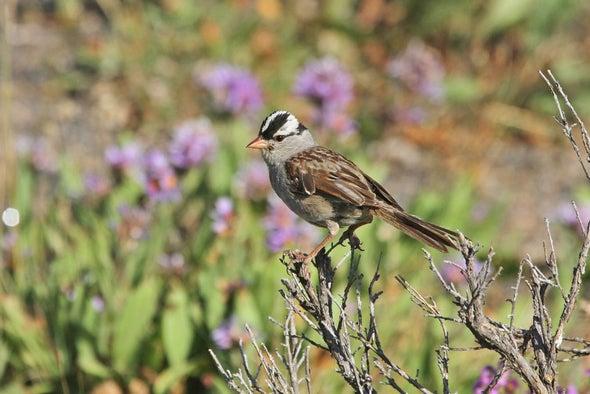 Birds Show Strong Musical Preferences