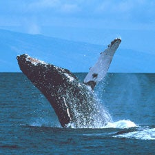 Despite Gains, One Third of the World's Marine Mammals Seen at Greater Risk