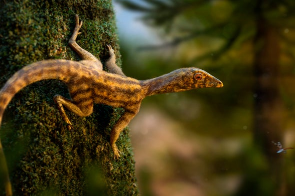 Pterosaur Origins Flap into Focus