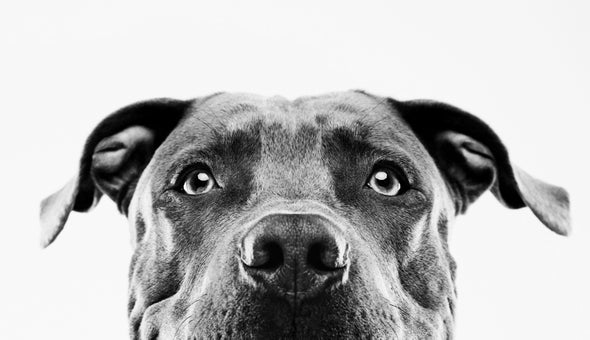 If Dogs Can Smell Cancer, Why Don't They Screen People?