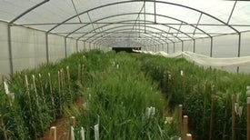 """Syrian """"Doomsday"""" Seed Collection Re-created in Lebanon"""
