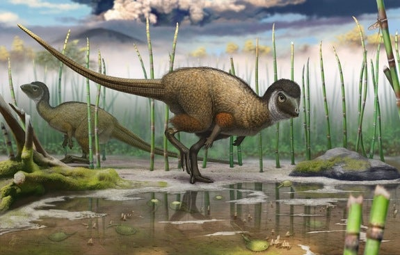 Most Dinosaurs May Have Sported Birdlike Feathers