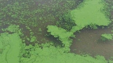 Harmful Algal Blooms Increase as Lake Water Warms