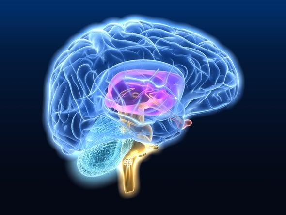 How Your Brain Learns Physics