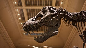 Dinosaur Family Tree Poised for Colossal Shake-Up