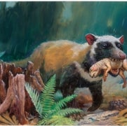 The Ascent of Mammals