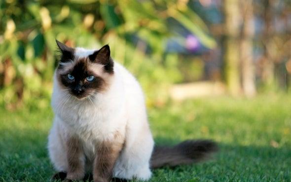 Cats' Cunning Extends beyond the Hunt