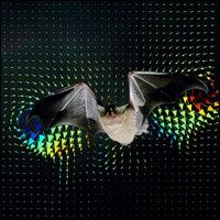 Bat's Wing Strokes Unlike a Bird's