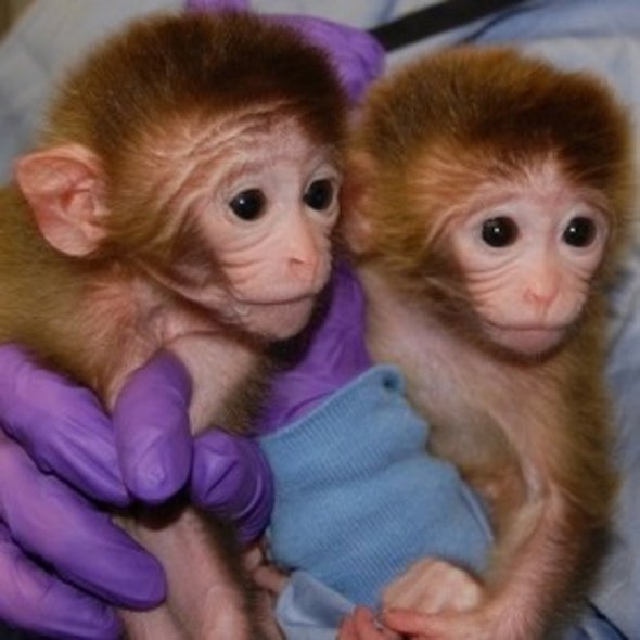 Baby Monkeys with 6 Genomes Are Scientific First