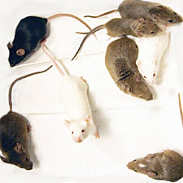 Engineered Mice Mimic Human Populations