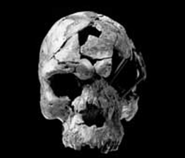 Skulls of Oldest <i>Homo sapiens</i> Recovered
